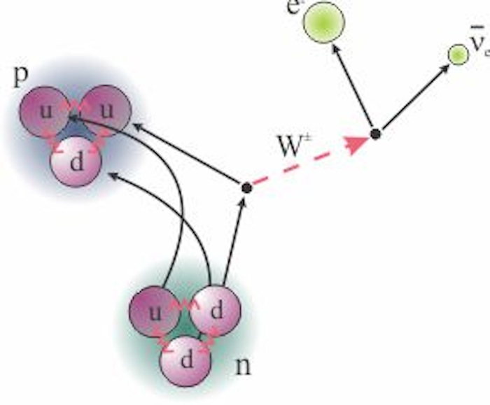 ornl physics division neutron beta decay